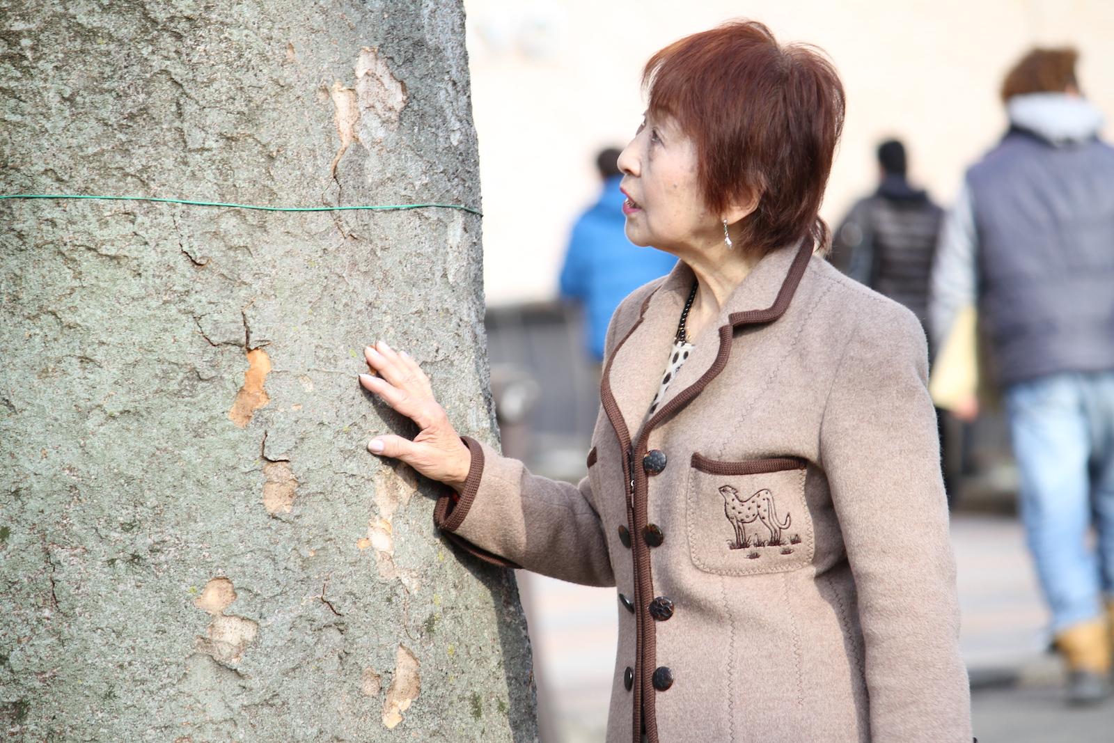私もこの木くらい長生きしたいわぁとおばあちゃん,シニア,写真,画像,素材,老人,高齢者,フリー