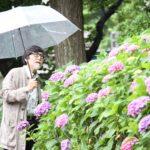 紫陽花とおじいちゃん