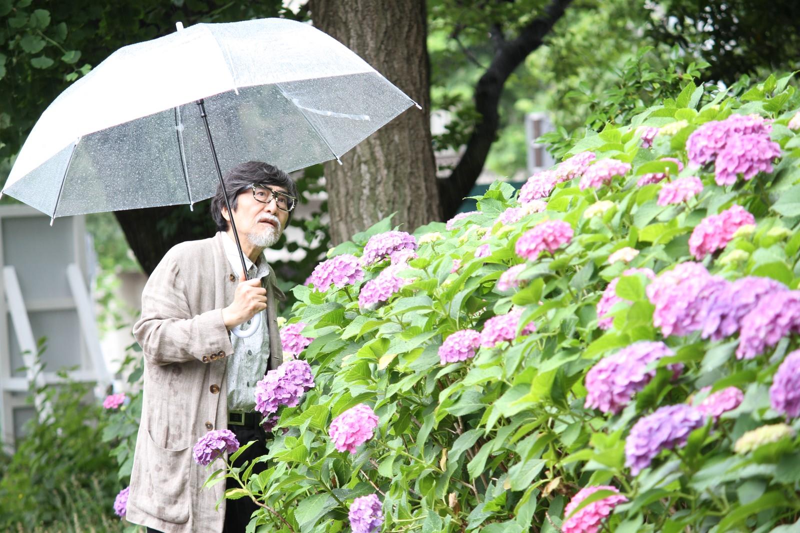 紫陽花とおじいちゃん,シニア,写真,画像,素材,老人,高齢者,フリー