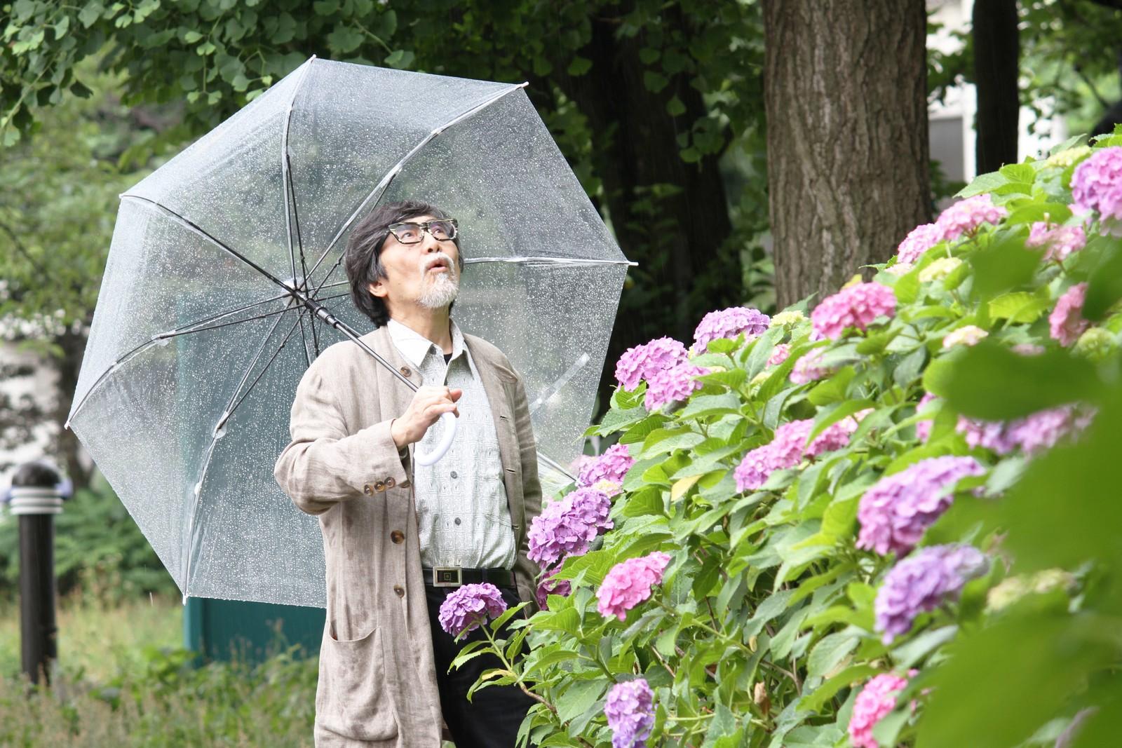 雨とおじいちゃんと上野の紫陽花,シニア,写真,画像,素材,老人,高齢者,フリー
