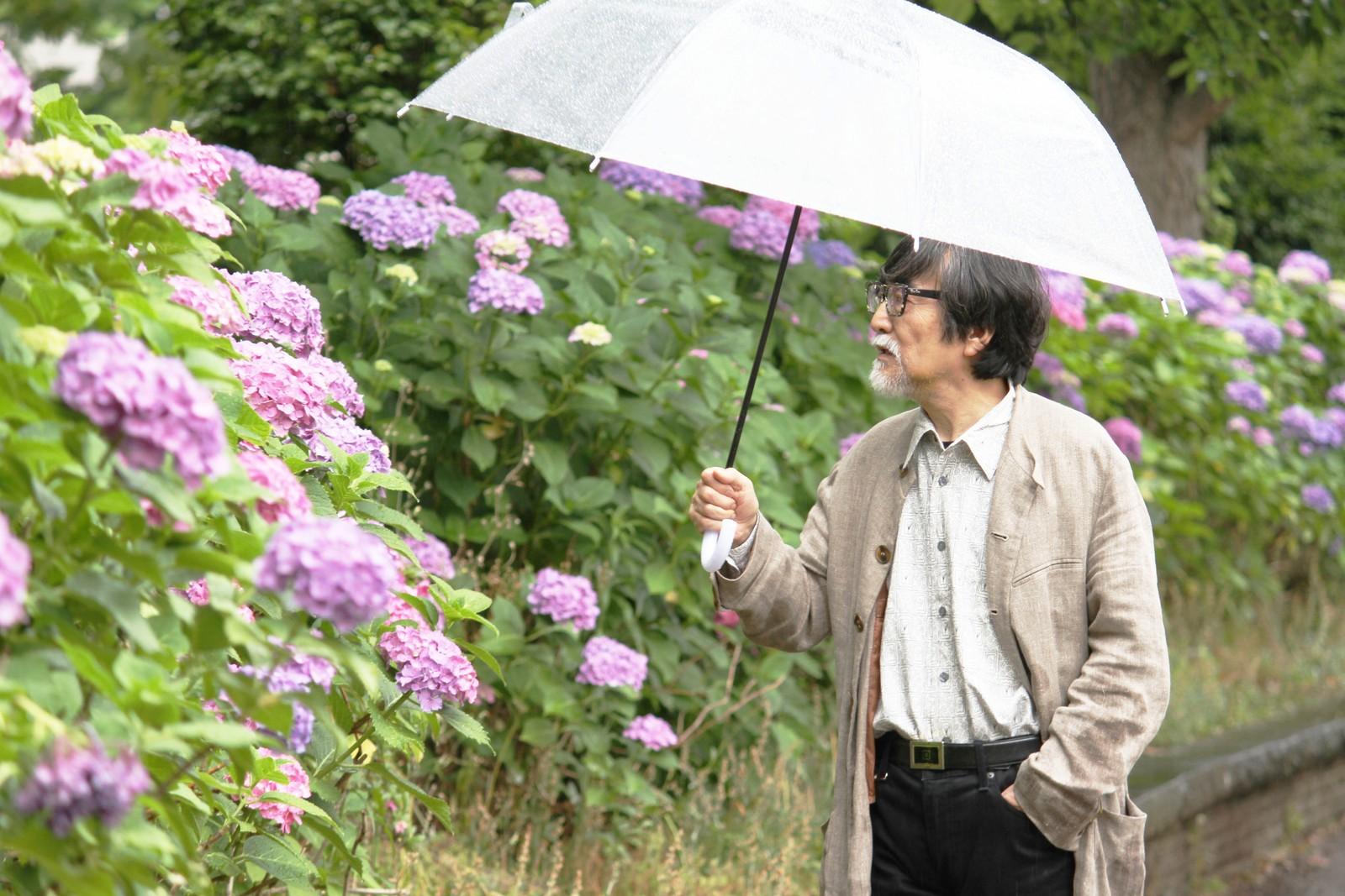 紫陽花を見つめるおじいちゃん,シニア,写真,画像,素材,老人,高齢者,フリー