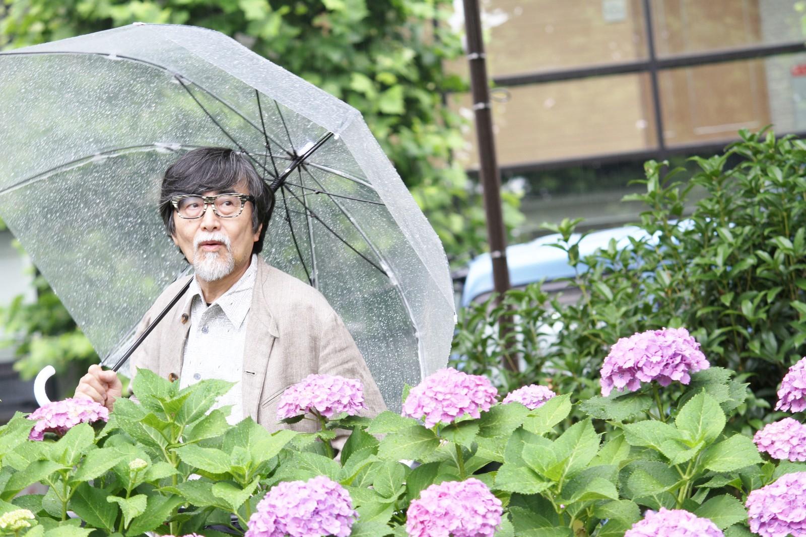 紫陽花に隠れて人間観察するおじいちゃん,シニア,写真,画像,素材,老人,高齢者,フリー