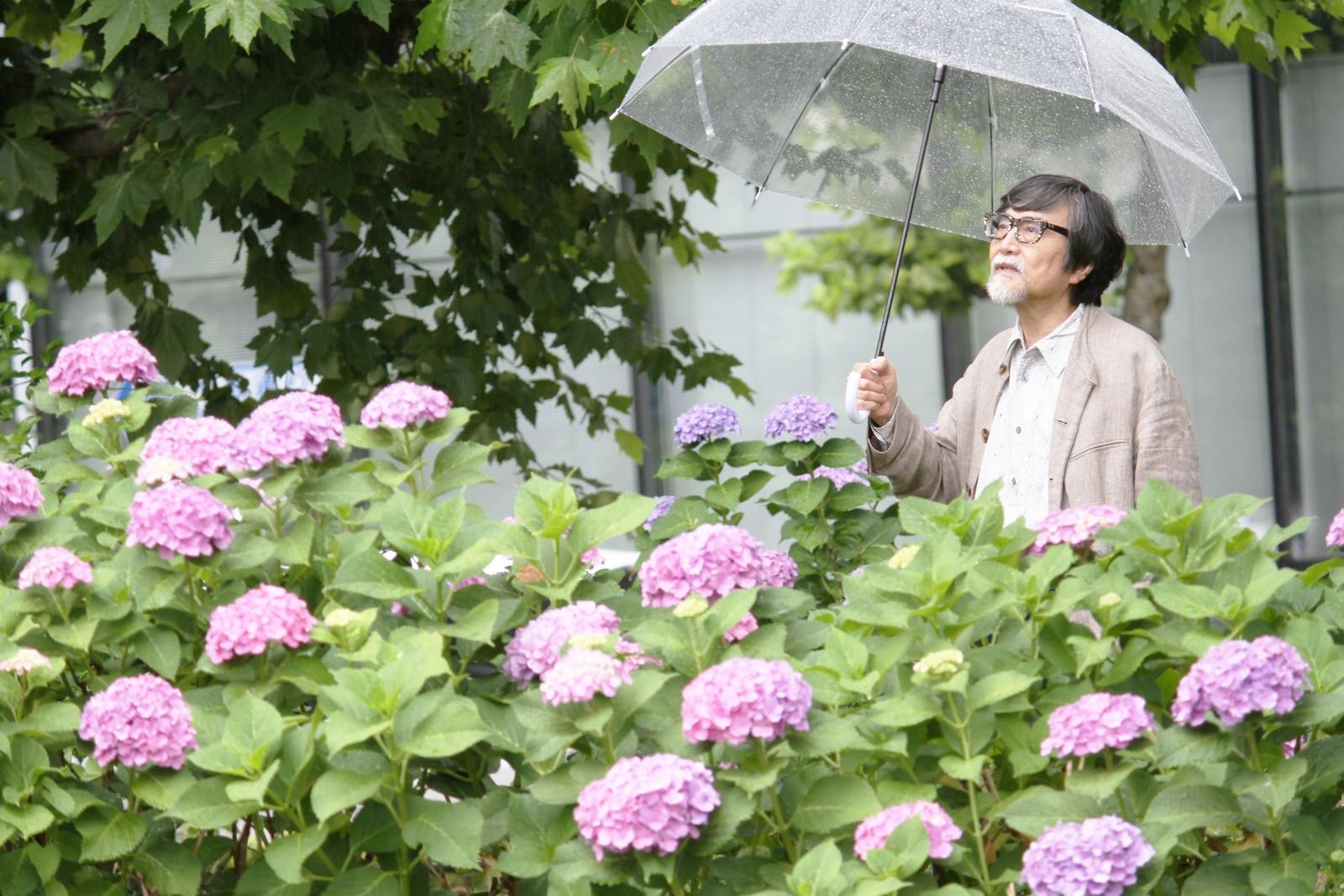 紫陽花の花言葉は「移り気」じゃと・・・,シニア,写真,画像,素材,老人,高齢者,フリー